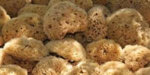 sea-sponges